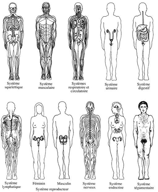 Physiologie définition - phybraiSN.org
