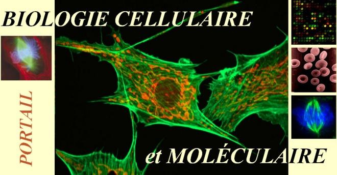 Portail:Biologie cellulaire et moléculaire - fr.wikipedia.org