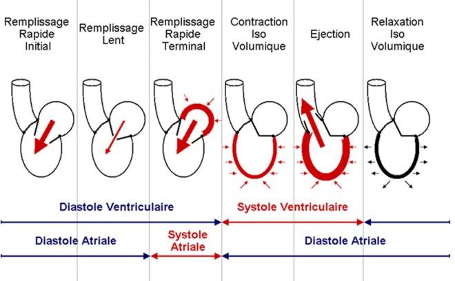 Synthèse schématique du cycle cardiaque - Campus Cardiologie et maladies vasculaires - campus.cerimes.fr
