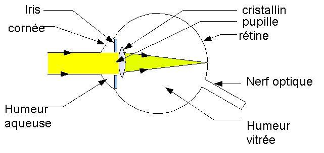 L'oeil peut être modélisé par une lentille et un écran - L'oeil et la vision - physix.fr
