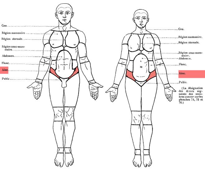 TOPOGRAPHIE MORPHOLOGIQUE COMPARÉE DE L'HOMME ET DE LA FEMME - Paul Richer, Anatomie artistique - fr.wikisource.org