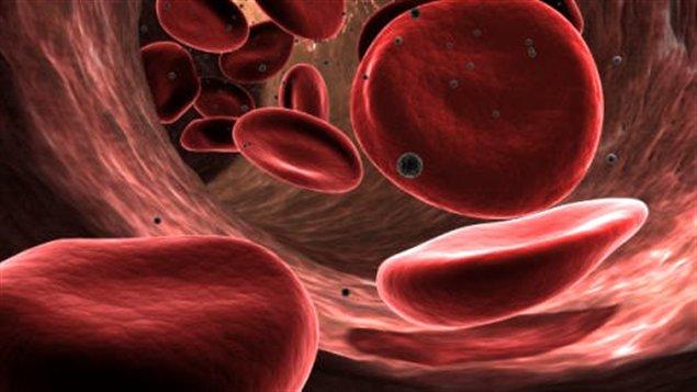 Les globules rouges ne sont pas aussi lent qu'on peut le penser - 29 vérités que vous ne savez pas sur le corps humain - Laëtitia - Le Baratt'ineur