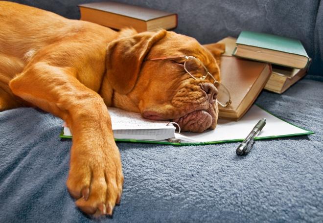 Les différents types de fatigue - guerir-l-angoisse-et-la-depression.fr