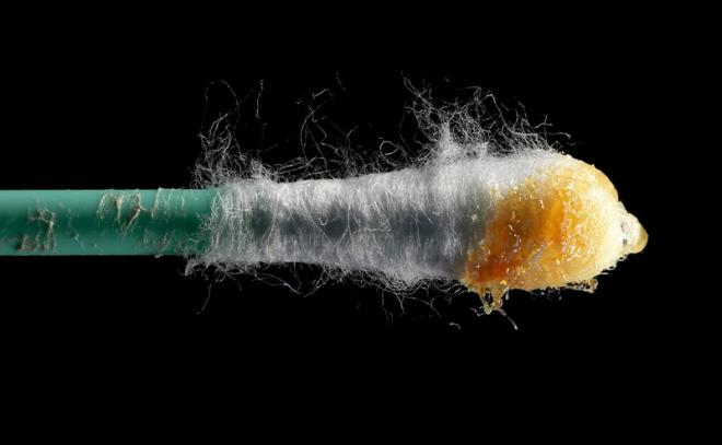 Cérumen au bout d'un coton tige - Gregory F. Maxwell - Wikipedia