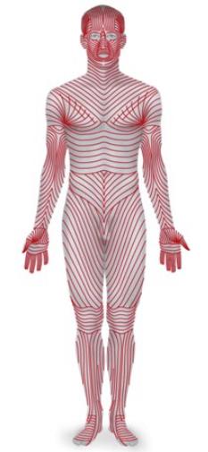 Variations du derme produisant un tracé caractéristique - ERPI - Axelle Sergent - SlidePlayer