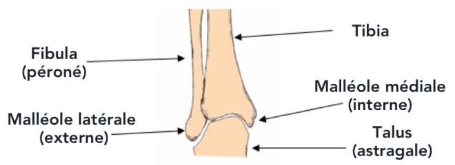 Anatomie - chirurgie-orthopedie-chanzy.com