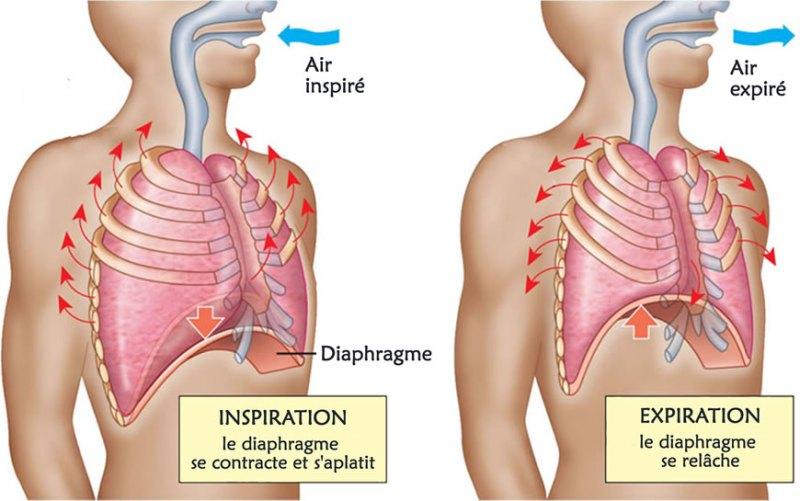 Les mouvements respiratoires - Kundalini Yoga - ekongkar.yoga