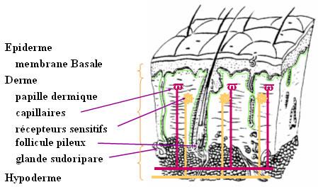 Illustrations - Brûlures étendues récentes : diagnostic et traitement initial (201a) - François Moutet - www-sante.ujf-grenoble.fr