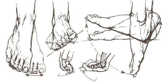Рис. 49. Схемы движения голеностопных и пальцевых суставов - bubook.net