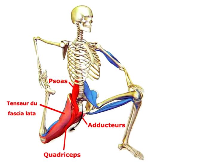 Étirement des muscles fléchisseurs de la hanche - entrainement-sportif.fr