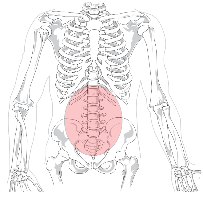 Lumbar region in human skeleton.svg - WIKIMEDIA COMMONS