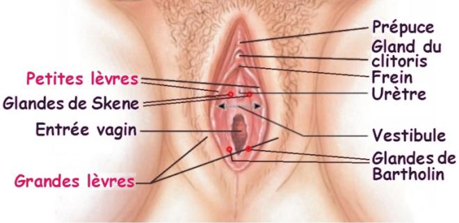 Sillons du vagin - T.A.L.C