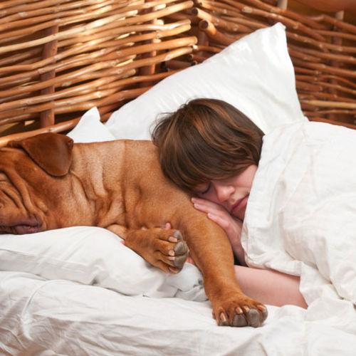Dormir avec son chien pour un meilleur sommeil - TROUBLES DU SOMMEIL - TOP Santé
