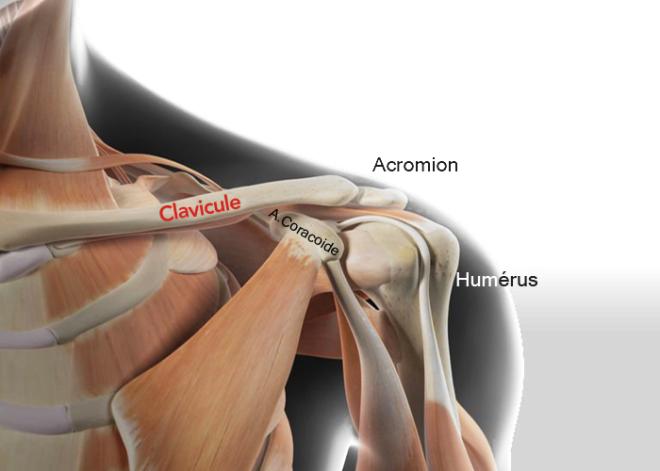 Anatomie de l'épaule. La clavicule est un os en forme de S allongé, reliant le sternum à l'omoplate. Cet os, facilement palpable sous la peau - Fracture de la clavicule : comment ça se soigne ? - Dr. Khaled BENOKBA - Santé Orthopédique