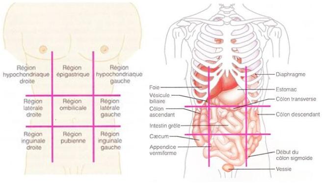 quadrants abdominaux et organes - Google Images