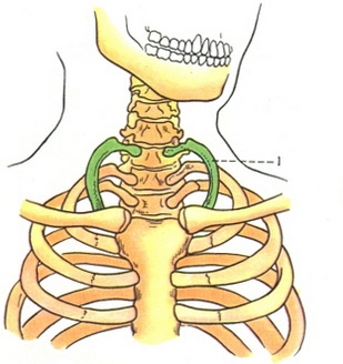 Цервикальное ребро - Google Images