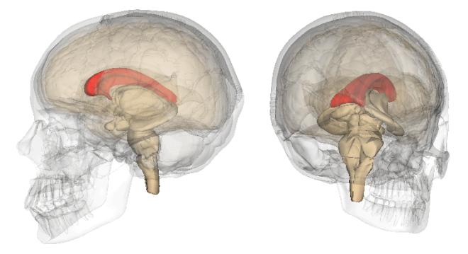 Vue 3D du corps calleux (en rouge) - LSDB - Wikimedia Commons