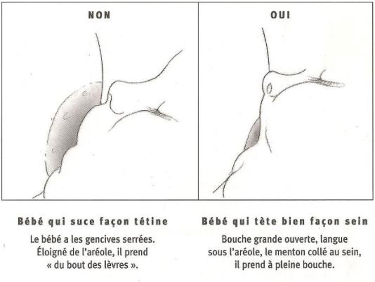 L'allaitement maternel - Flore Jeanson Ostéopathe - overblog