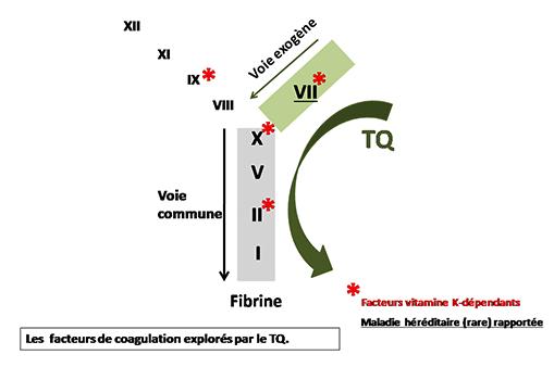 Les facteurs de coagulation des voies exogène et commune - Temps de Quick - ORBIO