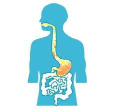 Reflux gastro-oesophagien.com : un remède naturel contre le reflux ? - Reflux Gastro Oesophagien