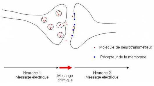 Synapse - CONSEIL DENTAIRE Dr. Albert Hauteville