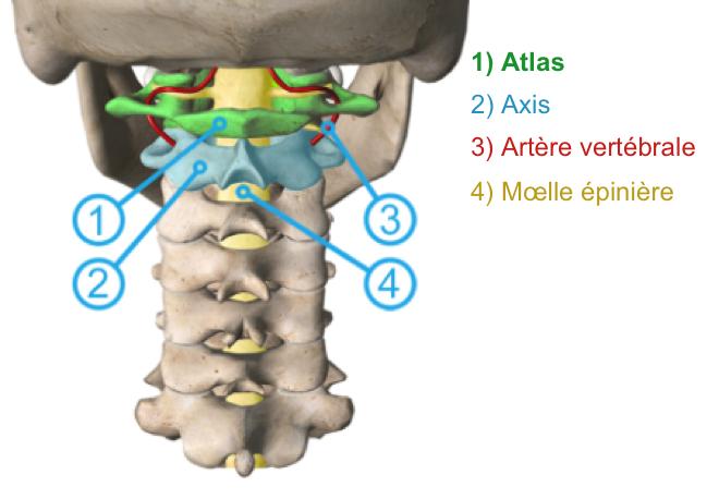 (via Pixelmator) Pourquoi est-il important de corriger la position de l'Atlas ? - ATLANTOtec