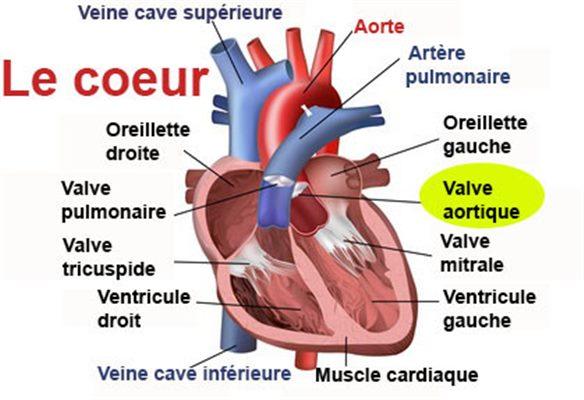 VALVE AORTIQUE - docteurclic