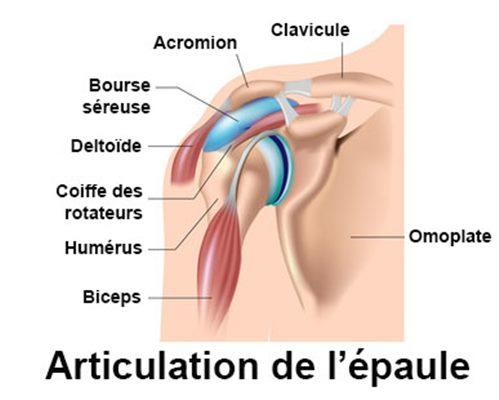 Articulation de l'épaule - docteurclic