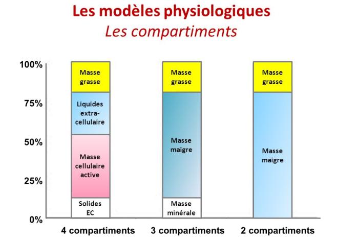 (via pixelmator) Les compartiments des modèles physiologiques - SlidePlayer - Google Images