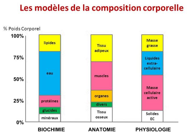 (via pixelmator) Les modèles de la composition corporelle - SlidePlayer - Google Images